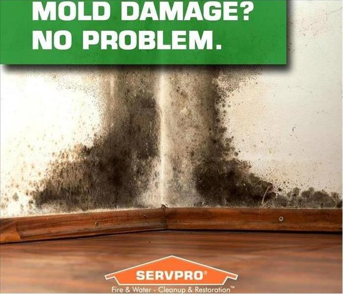 Mold Remediation Handling your mold emergencies!
